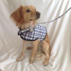 Arnés-chaleco para perro, correa perro, collar perro. de MuckaPets en Etsy