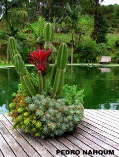 Succulents covering the dish - Fazenda das Flores BOTANICA POP 2009