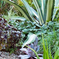 7 edible garden design ideas. Author and gardener Ivette Soler shares tips on growing the perfect kitchen garden in your front yard.