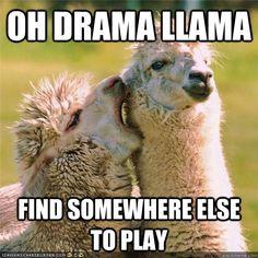 Image result for drama llama
