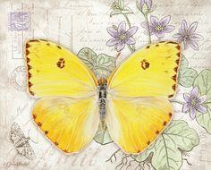 Lang Desktop Backgrounds | April 2015 | Butterflies