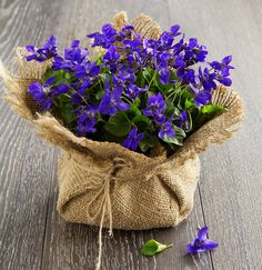 Photo about Bouquet of spring violets on a rough background. Image of purple, gift, violet - 39839698 Amazing Flowers, Purple Flowers, Beautiful Flowers, Flower Crafts, Flower Art, Happy Birthday Flower, Flower Arrangements Simple, Sweet Violets, Deco Floral