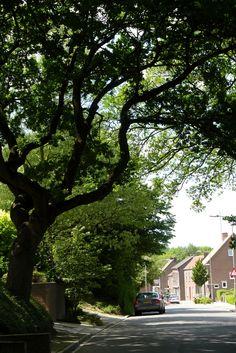 Bingelrade, Zuid-Limburg.
