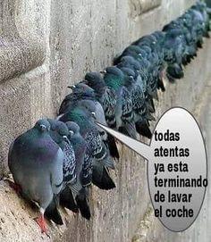 Preparados ... Listos ... Jajajaja #memes #chistes #chistesmalos #imagenesgraciosas #humor http://www.megamemeces.com/memeces/imagenes-de-humor-vs-videos-divertidos