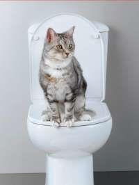 Apprendre à un chat à aller aux toilettes