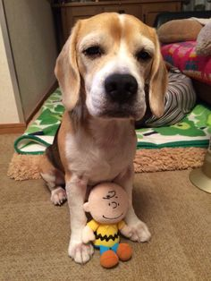 Beagle Charlie and Charlie Brown..