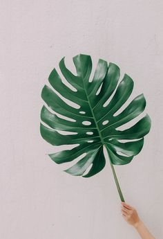 green Tree Leaves, Plant Leaves, A Level Textiles, Leaf Photography, Plant Aesthetic, Japanese Tattoo Designs, Draw On Photos, Painted Leaves, Nature Tattoos