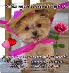 Good Morning, Teddy Bear, Humor, Blog, Animals, Cute Puppies, Buen Dia, Animales, Bonjour