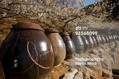 A plum farm in South Korea. These contains are for making korean plum wine. The flowers behind them are plum blossoms