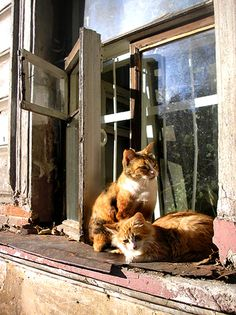 """""""Sittin' in the midday sun, dreaming of sunny days in June."""" --Ray Davies"""