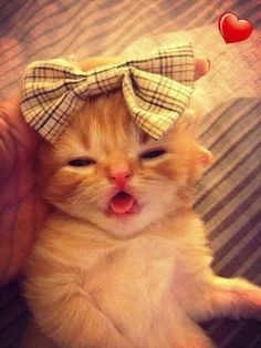 """* * Talk about tacky......I iz just a kitten. Leave dis stuff to the adults, cant'ts ya? """""""