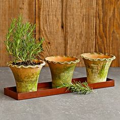 Aged Moss Scalloped Herb Pots With Tray #WilliamsSonoma