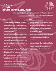 Armed Horsenality: Right Brain Extrovert Chart