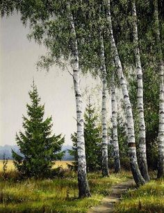 Ideas For Nature Landscape Art Ink Watercolor Trees, Watercolor Landscape, Landscape Art, Landscape Paintings, Birch Tree Art, Nature Photography, Landscape Photography, Seascape Art, Wild Nature