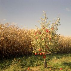 How to Grow an Apple Tree from a Seed in 12 Steps