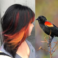 Bird inspiration hair!   My client brought in this picture of red winged black bird!   Think we matched it pretty well!   Black hair with orange and red hair using Kevin Murphy colors for top section and pravana for red and orange.