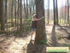 I am indeed a tree hugger. #FascniationEarth #Hippie #TreeHugger #NatureLover
