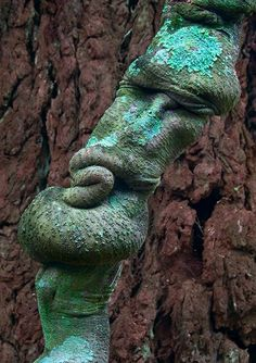Nature's Face......A tree trunk by Ellen Yuen Hunter Region Botanic Gardens Heatherbrae NSW Australia