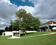 carvalho araújo: galeria mário sequeira