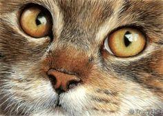 portrait de chat dans l'aquarelle par Tracy Salle