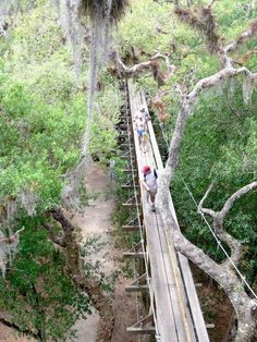 This Swinging Bridge In Florida Will Make Your Stomach Drop  Myakka River State Park near Sarasota is one of Florida's oldest and largest state parks. The park offers a unique experience, from the huge selection of native wildlife to the biggest airboats in the world. Visitors can even walk through the treetops on the Canopy Walkway..Do you think this looks scary or fun?