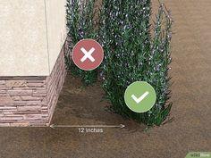 3 Ways to Waterproof Your Basement - wikiHow Backyard Drainage, Backyard Patio, Backyard Landscaping, Basement Waterproofing Paint, Damp Basement, Landscaping Around House, Drainage Solutions, House Foundation, Basement Windows