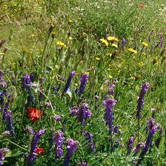 Wildflower meadow, Liverpool World Museum. Raebattesonart