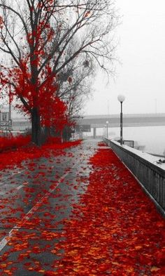 Trendy Black And White Nature Photography Color Splash Autumn Leaves Ideas Beautiful World, Beautiful Places, Beautiful Pictures, Color Splash, Color Pop, Red Color, Splash Art, White Photography, Nature Photography
