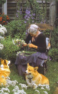 Tasha Tudor and her dogs among the dried flowers harvest-1