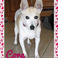 Fort Wayne, Indiana - Rat Terrier. Meet Cora, a for adoption. https://www.adoptapet.com/pet/20615344-fort-wayne-indiana-rat-terrier-mix