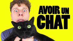 Norman fait des vidéos - Avoir un chat