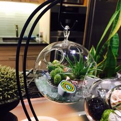 Adorable air plant terrarium with stand.  Add some fun and color to your home!