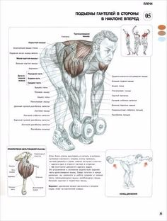 10) Разведение гантелей в наклоне  Разведения гантелей в наклоне изолируют нагрузку на заднюю головку дельт и применяются для того, чтобы придать заднему пучку мышц отчетливую бугристую форму, добавить полосатости и выделить его на фоне мышц спины.  Задние дельты, трапеции и мышцы-вращатели плеча/Формирующее упражнение/Форма и рельеф задних плеч
