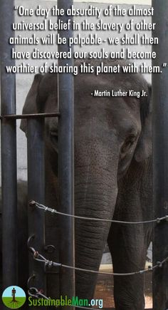 Slavery Of Animals Will One Day Be Considered Absurd