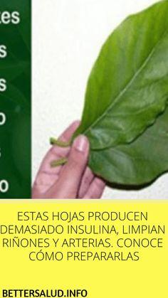 Medicamentos herbales filipinos para la diabetes