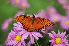 Butterflying made simple! Learn butterfly names and where the best places are to look for them.