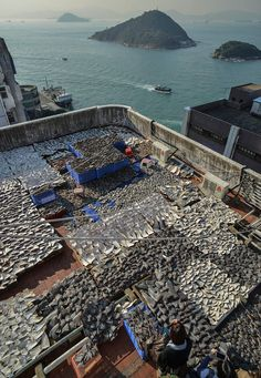 Very sad.. thousand of mutilated shark fins drying on a rooftop in Hong Kong