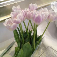 Lavender French tulips in Bolier's showroom