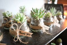 Succulents in a baby food jar! Got this off a FB page! Thank you Sarah!