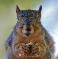 .squirrel.