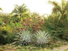 Helen and Brice Marden's Caribbean Hotel, Slide Show Garden Design Calimesa, CA