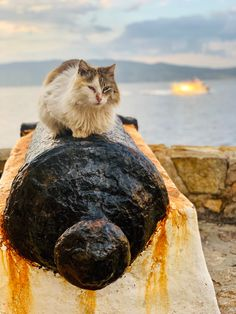Hydra island, the heaven for cats Heaven, Around The Worlds, Island, Cats, Animals, Sky, Gatos, Animales, Animaux