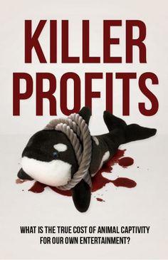 Captivité animale pour votre divertissement ?  Boycott Seaworld !