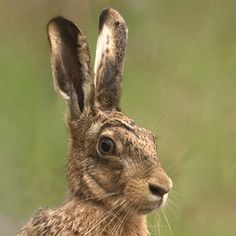 March Hare, Easter Bunny, Color Inspiration, Squirrel, Childrens Books, Rabbit, Wildlife, Bunnies, Genealogy