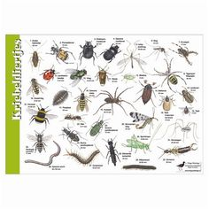 Herkenningskaart Planten - Google zoeken