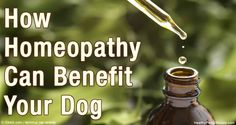 Dr. Loops also discusses his recommendations for the use of puppy nosodes as an alternative or adjunct to puppy shots. http://healthypets.mercola.com/sites/healthypets/archive/2016/05/22/homeopathic-nosodes.aspx