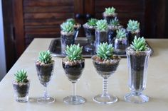 Vintage Glass Collection | The Republic of Succulents