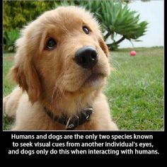 Humans and dogs.