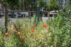 Para levar verde à cidade Paris recruta cidadão-jardineiro