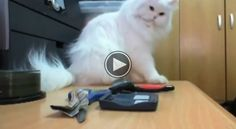 Sneaky Cats Caught on Camera!